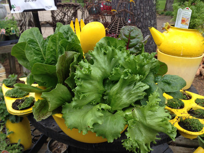 Sat-Apr 18-2020 4 pm Two Healthy Salad Bowls 200418161